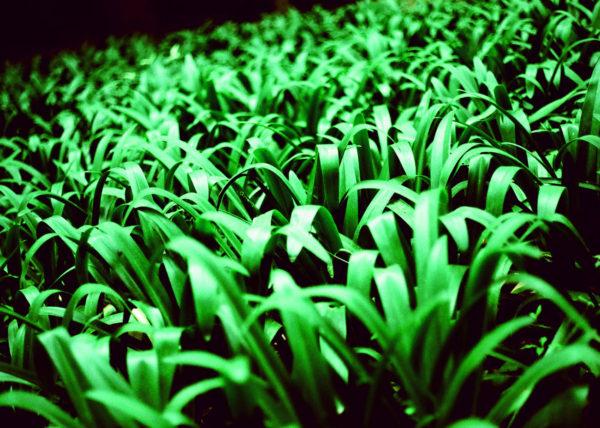 Jardin vegetación laberinto de horta