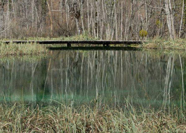Reflejo de la vegetación y puente en lago
